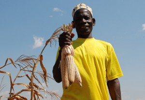Hardy, drought tolerant maize is life for African farmers. Photo: Anne Wangalachi/CIMMYT